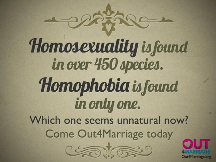 Only Homophobic Species