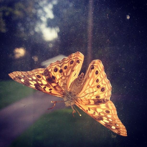 Mornin', Mothra.