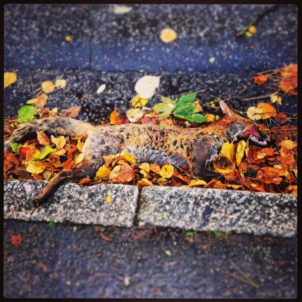 Poor victim of St. Jude #ukstorm via Instagram