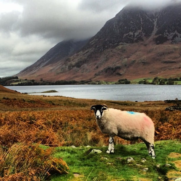 This sheep ain't moving for any soft southern walkers... by rorycellan