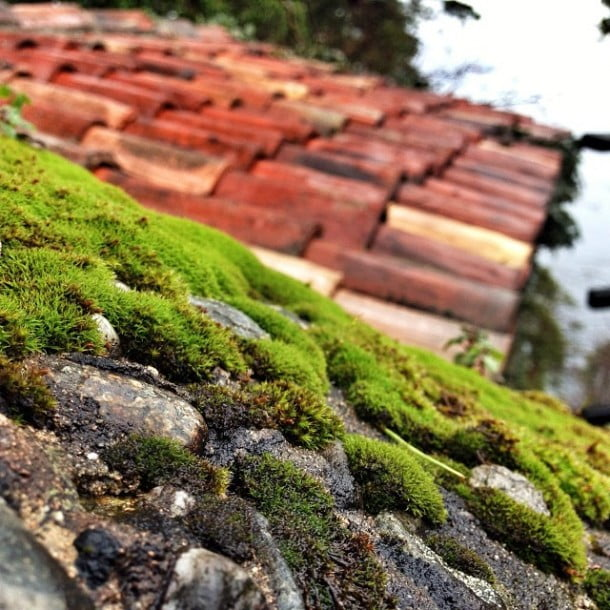 A mossy wall in Italy by white_african
