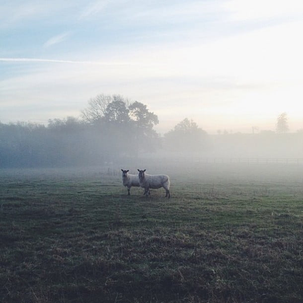 """I live in the English countryside""  by Luke Cotton"