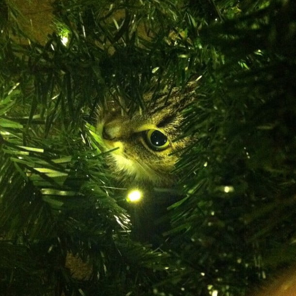 Christmas tree cat by gavinholmes85
