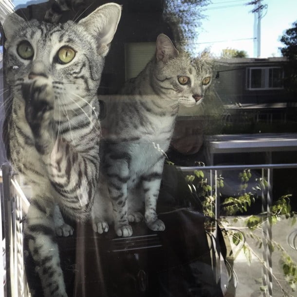 Happy National Cat Day by chenpamela
