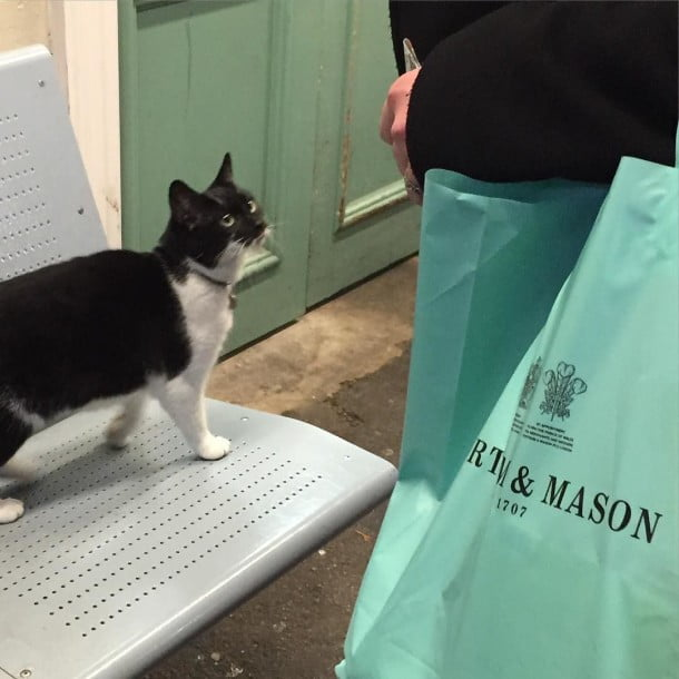 Nice to meet you, The Gipsy Hill Cat