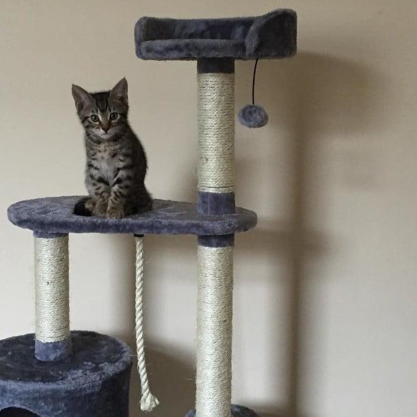 adorable kitten, sidney by thenicdavison